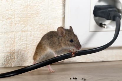 Pest Control in Forest Hill, SE23. Call Now! 020 8166 9746