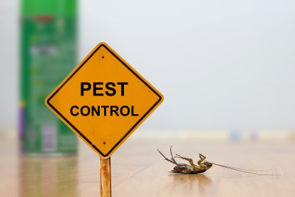 Pest Contol in Forest Hill, SE23. Call Now 020 8166 9746
