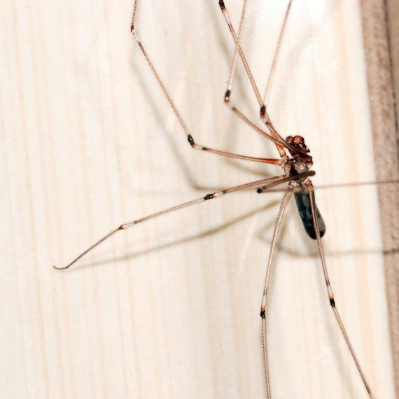 Spiders, Pest Control in Forest Hill, SE23. Call Now! 020 8166 9746